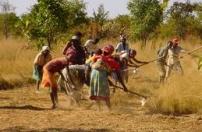 Guiné-Bissau tem grandes potencialidades agrícolas subaproveitadas