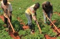 Lunda Sul cadastra 300 associações agrícolas
