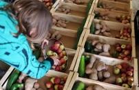 Nações Unidas aprendem com Portugal a combater desperdício alimentar