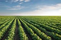 Conheça as 17 maiores cooperativas agro do Brasil, segundo a Forbes